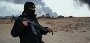 Правителствата в Европа приветстваха разгрома на ИДИЛ