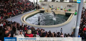 НОВО ПОПЪЛНЕНИЕ: Делфинче се роди във Варненския делфинариум