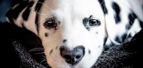 Уайли – кучето със сърце на носа, в което ще се влюбите (ГАЛЕРИЯ)