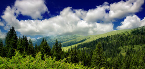 Нова технология връща горите