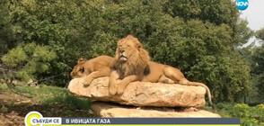 """В """"Темата на NOVA"""": Как изглежда един от най-зловещите зоопаркове в света?"""