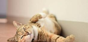 Котките реагират на името си