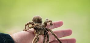 Митничари откриха 757 тарантули в колет