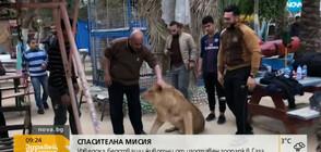 В ИМЕТО НА МИРА: Спасиха над 50 животни от Ивицата Газа