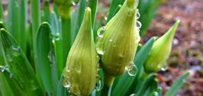 Кога ще спрат пролетните валежи?