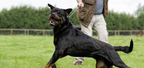 Собствениците на кучетата, нахапали деца и възрастен мъж - с обвинение