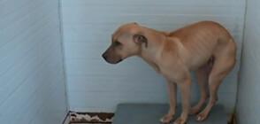 """Разследване на NOVA: Как са организирани кучешките боеве край язовир """"Искър""""?"""