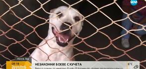 Няма повдигнати обвинения за незаконните боеве с кучета край Самоков