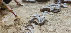 Откриха динозавърско гробище на 220 милиона години (СНИМКИ)