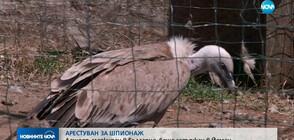 Лешояд, маркиран в България, беше задържан в Йемен