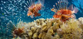 Риби, които изглеждат нереални (ГАЛЕРИЯ)