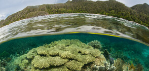 ООН: Почти 1 милион растения и животни са застрашени от изчезване