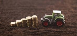 ЕС стартира план за нисколихвени кредити за млади фермери