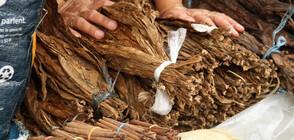 """Повдигнаха обвинения на 10 души за нелегално производство на """"марков"""" тютюн"""