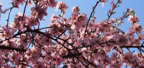 Вятърът утихва, връща ли се пролетта?