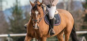Уестърн езда в Южния парк в София