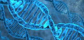 Най-старата скандинавска човешка ДНК беше извлечена от дъвка на 10 000 години