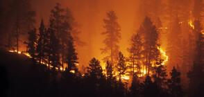 ЕС предприема мерки за борба с горските пожари