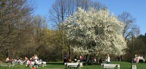 СО: В парковете и градините са извършени двукратни обработки срещу кърлежи