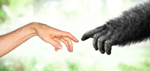 Учени опровергаха популярна теория за произхода на човека