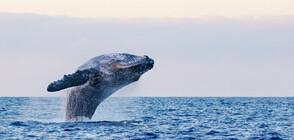 Пластмасова скулптура на кит постави световен рекорд (СНИМКА)