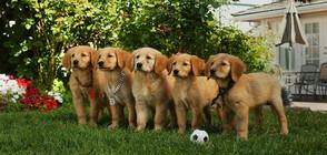 Говорещи кученца, смях, лай и чудеса на дансинга в съботния кино следобед по NOVA