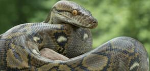 Змия изскочи от тоалетна чиния и ухапа мъж от Флорида