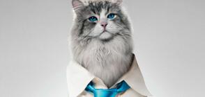 """Кевин Спейси се превръща в котарак в забавната премиера """"Девет живота"""" по NOVA"""