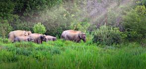 Три слона са отровени в Малайзия