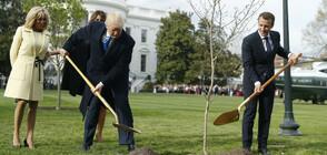 Макрон ще изпрати ново дръвче в Белия дом