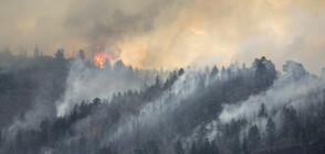 Огромен пожар пламна на Халкидики (ВИДЕО)