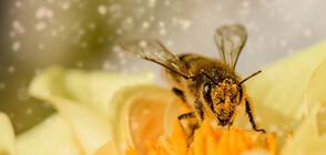 """В """"ТЕМАТА НА NOVA"""": Глобалният проблем с измирането на пчелите"""