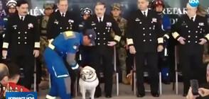 Пенсионира се най-известното куче в Мексико (ВИДЕО+СНИМКИ)