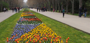 След смъртта на дете: Пълна забрана за автомобили в Морската градина във Варна