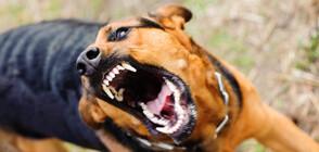Домашно куче нападна 10-годишно дете в София