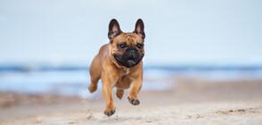 С КУЧЕ НА ПЛАЖА: Рисковете за домашните любимци от пясъка и морската вода