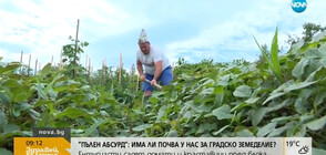 Ентусиасти садят домати и краставици пред блока (ВИДЕО)