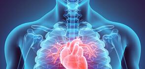 Откриха клетки, които лекуват сърцето