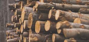 Измамници завличат възрастни хора с дърва за огрев
