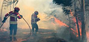 Хиляда пожарникари се борят с горски пожари в Португалия