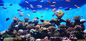 В Китай откриха гигантски аквариум на височина над 2200 м (СНИМКИ)