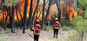 Смъртоносните пожари в Португалия отново се разгарят (ВИДЕО+СНИМКИ)