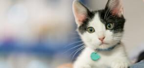 Котка падна от 18 етаж и оцеля (СНИМКА)