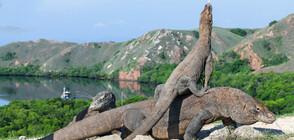 Индонезия ще затвори за посещения остров Комодо