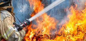 Пожар гори в Драгоманското блато (ВИДЕО)