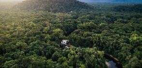 Бразилският президент отхвърли обвиненията за сеч в Амазонската джунгла