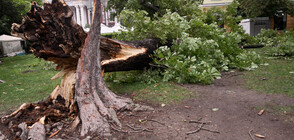Серия бури и градушки удари България, има и жертва (ОБЗОР)