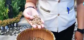 """""""КОПИ ЛУВАК"""": Кафето с главозамайваща цена, произвеждано от изпражнения"""