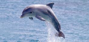 Делфинче на 9 дни е починало в делфинариума във Варна