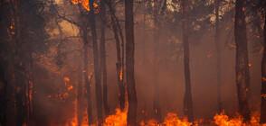 Масова евакуация на Канарските острови заради горски пожар